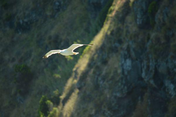 SY Montana, Swan 48